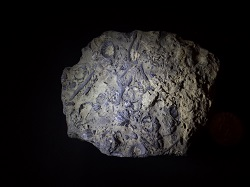 Rock with Fossils