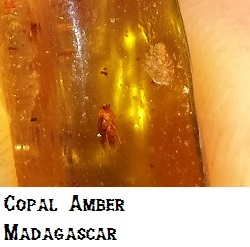 Insect included, Copal Amber